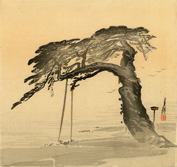 Gekkô: Pine tree at the seashore