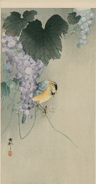 Koson -  Tit on a vine tendril