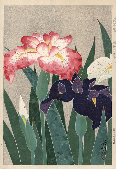 Shinmei - Flowering Iris